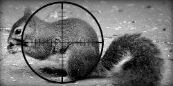 squirrel_target_slider